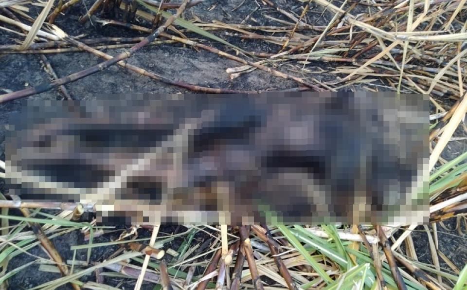 Irmãos são assassinados a tiros e corpos são carbonizados em canavial